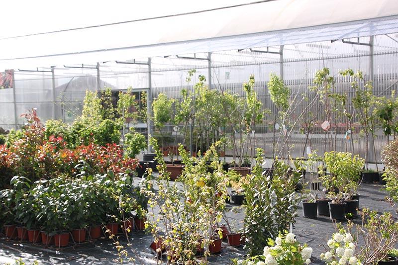 Piante grasse da esterno con fiori with piante grasse da - Piante da interno con fiori ...